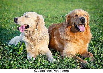 szépség, kutyák, fiatal, portré, két