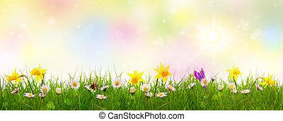 színes, fű, zöld, flowers., eredet