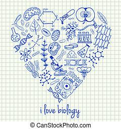 szív alakzat, biológia, csekkszámlák