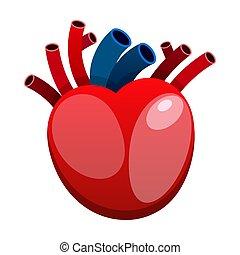 szív, elszigetelt, vektor, háttér, white piros