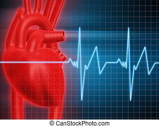 szív, emberi