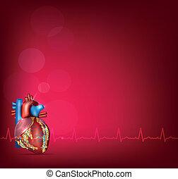 szív, háttér, anatómia, fényes, emberi, piros