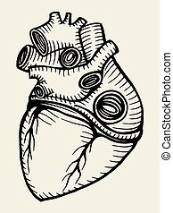 szív, skicc, emberi