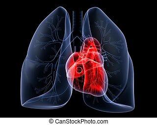 szív, tüdő