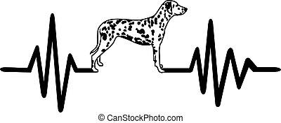 szívdobbanás, egyenes, fehér, dalmáciai, kutya
