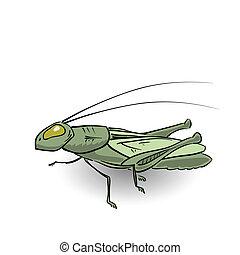 szöcske, zöld