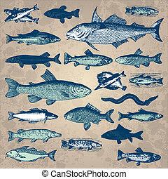 szüret, fish, állhatatos, (vector)