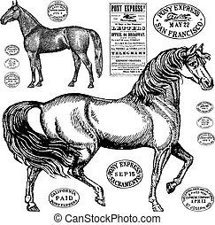 szüret, ló, vektor, grafika