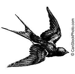 szüret, madár