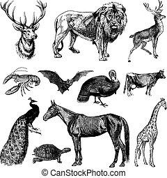 szüret, vektor, állhatatos, állat