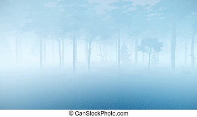 szürkület, kísérteties, sóvárog, köd, erdő, sűrű, 4k