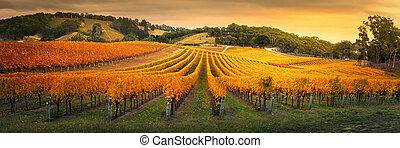 szőlőskert, arany-