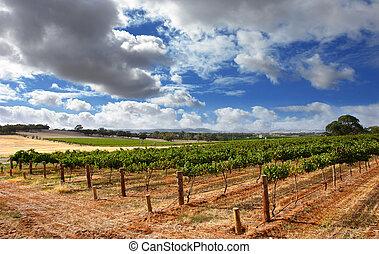 szőlőskert, felhős