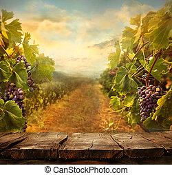 szőlőskert, tervezés