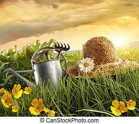 szalmaszál, gabonaszem, lefektetés, víz, mező, konzerv, kalap