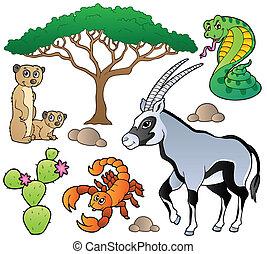 szavanna, 1, állatok, gyűjtés