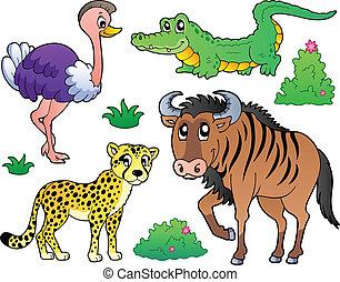szavanna, 2, állatok, gyűjtés