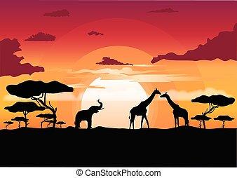 szavanna, napnyugta, állatok, árnykép, afrikai