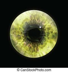 szem, vektor, macro., szembogár, sárga