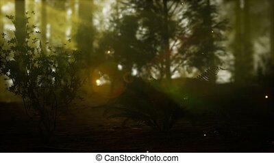 szentjánosbogár, erdő, köd, ködös