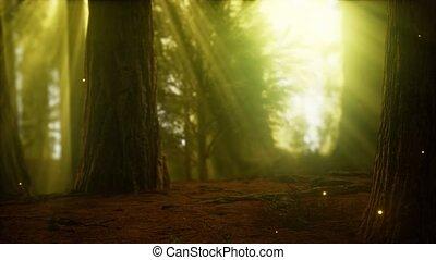 szentjánosbogár, köd, erdő, ködös