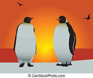 szeret, penguin.