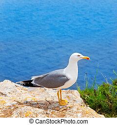 sziget, balearic, tengertől távol eső, madár, tenger