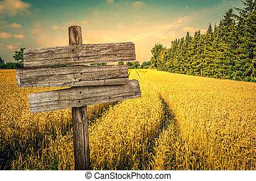 táj, arany-, termés, mező