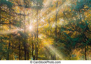 táj, gyönyörű, öntvény, nap, ősz erdő, meleg
