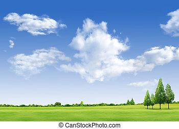 táj, gyönyörű, mező, forrest, ég blue, zöld fa, fű