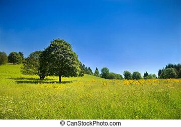táj, kék, idillikus, kaszáló, ég, mély, zöld, vidéki