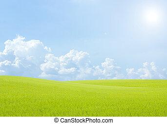 táj, mező, háttér, ég felhő, blue zöld, rizs, fű