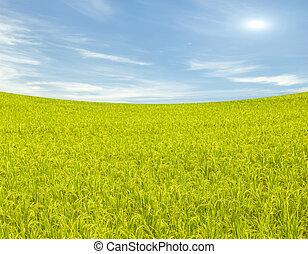 táj, mező, háttér, ég felhő, kék, rizs