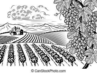 táj, völgy, fekete, fehér, szőlőskert