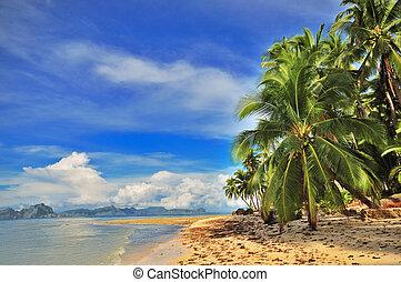 távozás, tropikus