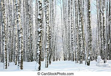 tél, napvilág, erdő