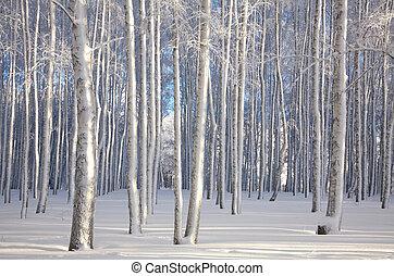 tél, napvilág, megvesszőz