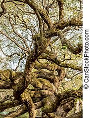 tölgy, él, elágazik, legyezőmozgás, fa