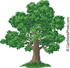tölgy, fű, fa, zöld
