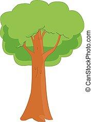 tölgy, vektor, fa