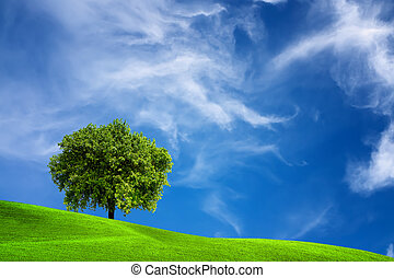 tölgyfa, természet
