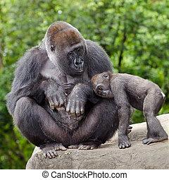 törődik, gorilla, fiatal, női