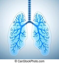 tüdő, egészséges
