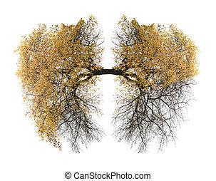 tüdő, fa