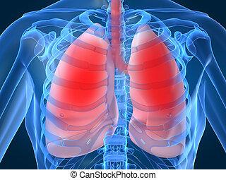 tüdő, fertőzés