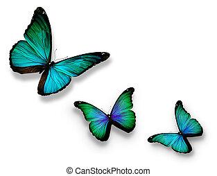 türkiz, pillangók, három, fehér, elszigetelt