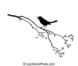 t, madár, elágazik, árnykép