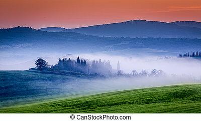 tanya, berkek, szőlőskert, olajbogyó, ködös, napkelte