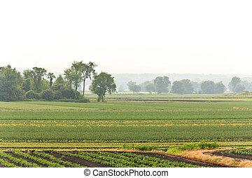 tanya, nyár, nedvesség
