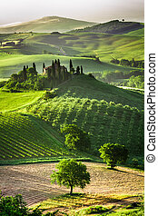 tanya, olajbogyó, szőlőskert, berkek